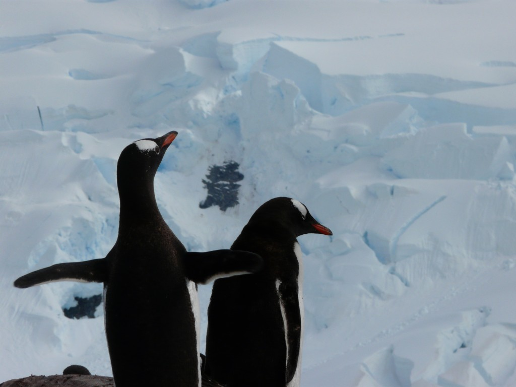 travel to Antarctica