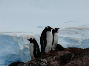 Planning a Trip to Antarctica – My Guest Post
