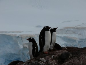Weekly Photo – Penguins in Antarctica