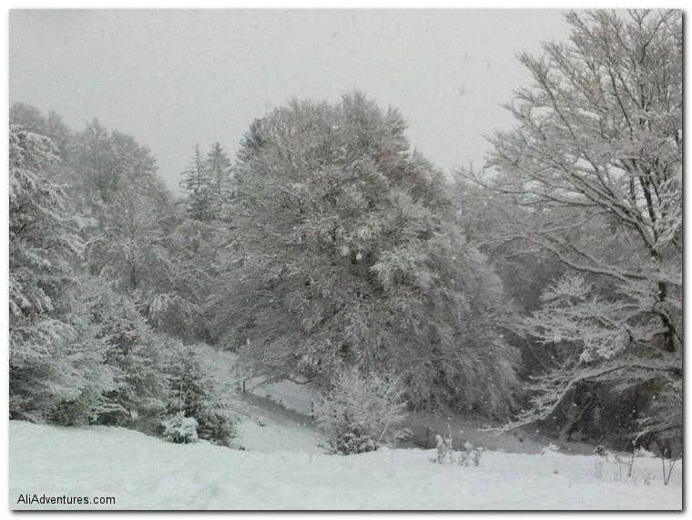Freiburg, Schauinsland snow