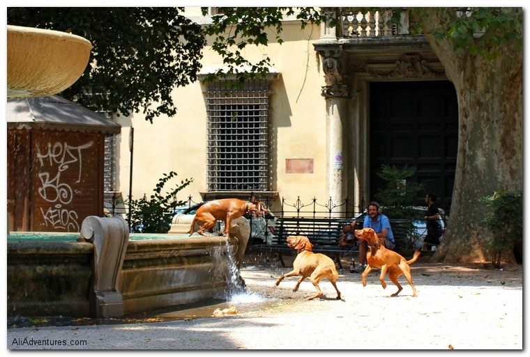 Rome, Italy, dogs in fountain