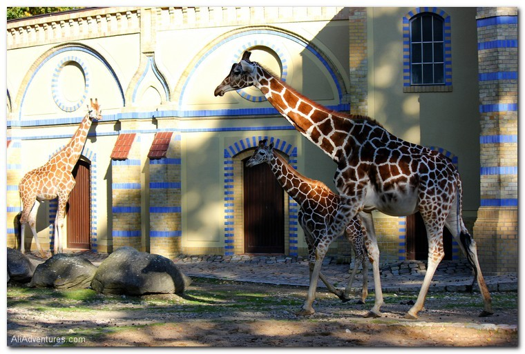 visiting the Berlin zoo