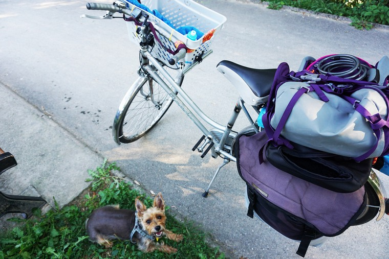 non-traditional people - full-time travel with a dog