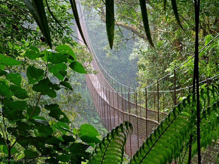 things to do in Panama Boquete canopy tours