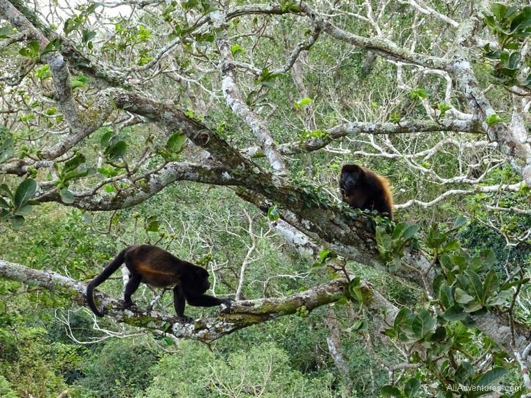 San Juan del Sur, Nicaragua zip lining - monkeys